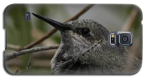 Baby Humming Bird Galaxy S5 Case by Lynn Geoffroy
