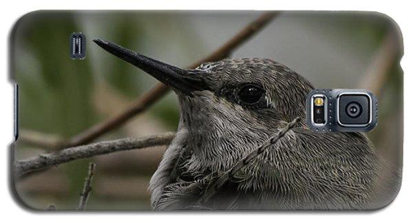 Baby Humming Bird Galaxy S5 Case