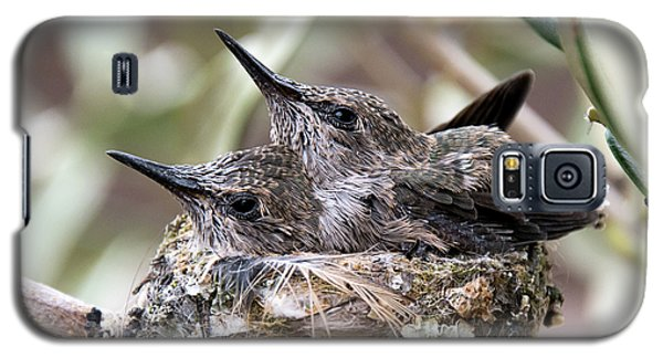 Baby Hummingbirds Outgrowing Their Nest Galaxy S5 Case