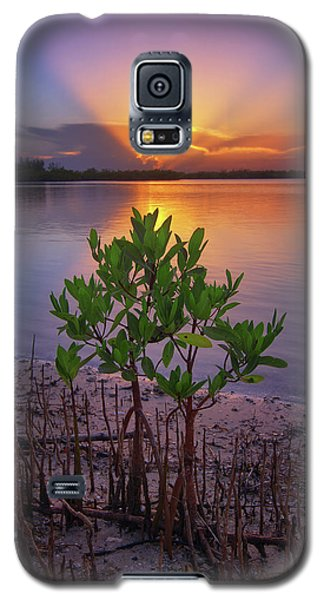 Baby Mangrove Sunset At Indian River State Park Galaxy S5 Case by Justin Kelefas