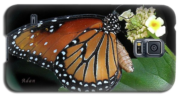 Baby Monarch Macro Galaxy S5 Case by Felipe Adan Lerma