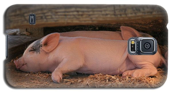 Baby Piglets Galaxy S5 Case
