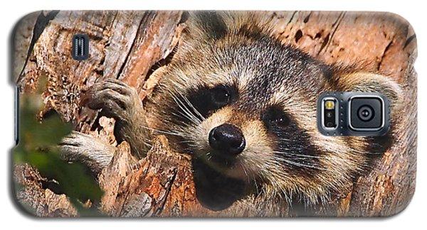 Baby Raccoon Galaxy S5 Case