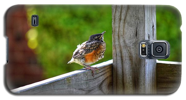 Baby Robin  Galaxy S5 Case