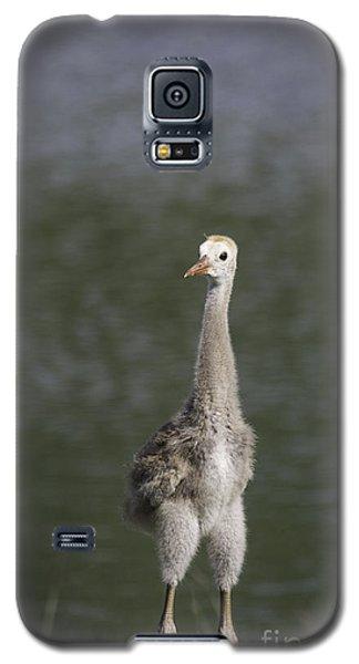 Baby Sandhill Crane Galaxy S5 Case