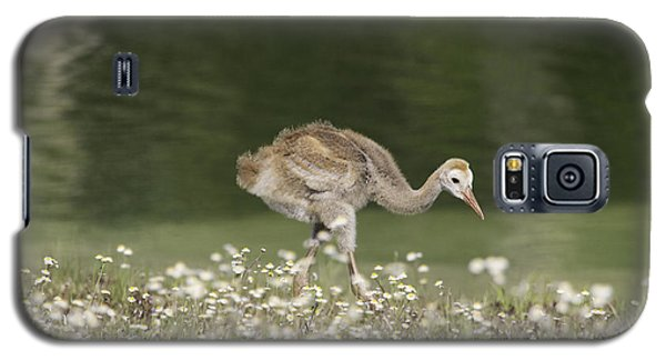 Baby Sandhill Crane Walking Through Wildflowers Galaxy S5 Case