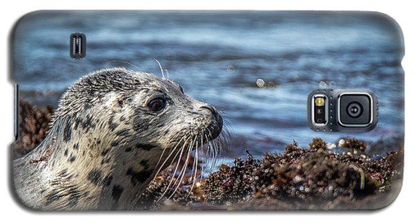 Baby Seal Galaxy S5 Case