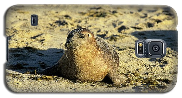 Baby Seal In Sand Galaxy S5 Case