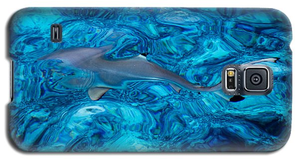 Baby Shark In The Turquoise Water. Production By Nature Galaxy S5 Case