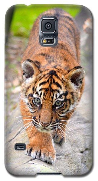 Baby Sumatran Tiger Cub Galaxy S5 Case