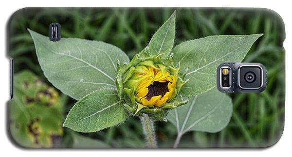 Baby Sunflower  Galaxy S5 Case