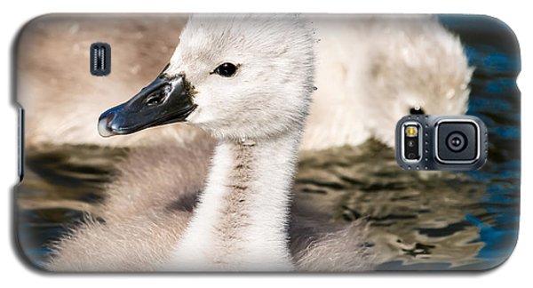Baby Swan Close Up Galaxy S5 Case
