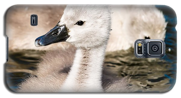 Baby Swan Close Up Galaxy S5 Case