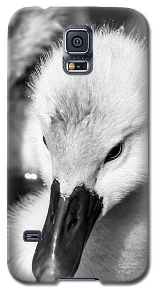 Baby Swan Headshot Galaxy S5 Case