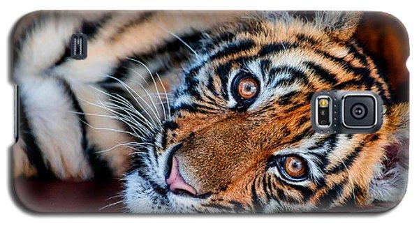 Baby Tiger Galaxy S5 Case