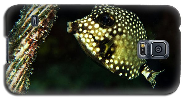 Galaxy S5 Case featuring the photograph Baby Trunk Fish by Jean Noren