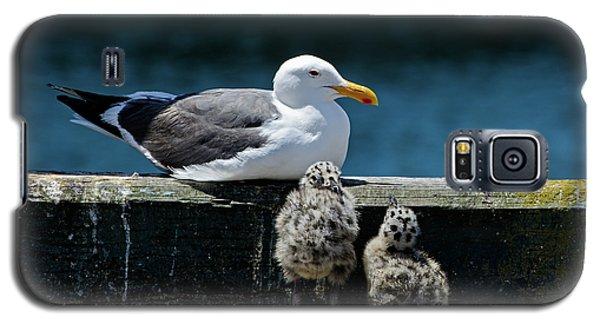 Baby Western Gulls With Mom Galaxy S5 Case
