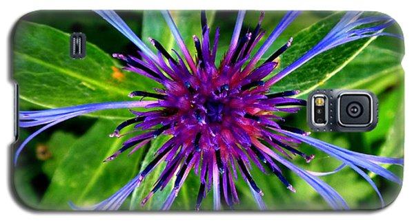 Bachelor Button Blossom Galaxy S5 Case