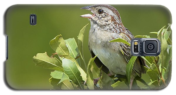 Bachman Sparrow Galaxy S5 Case