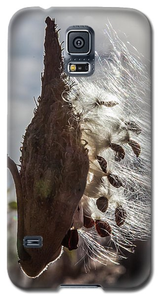 Back Lit Milkweed Pod Galaxy S5 Case