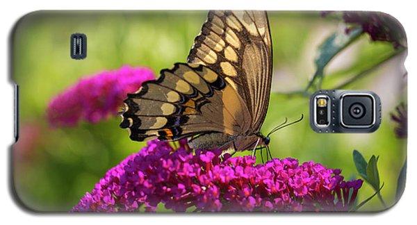 Back-lit Papilio Galaxy S5 Case