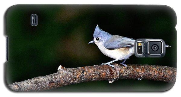 Back Yard Bird Galaxy S5 Case