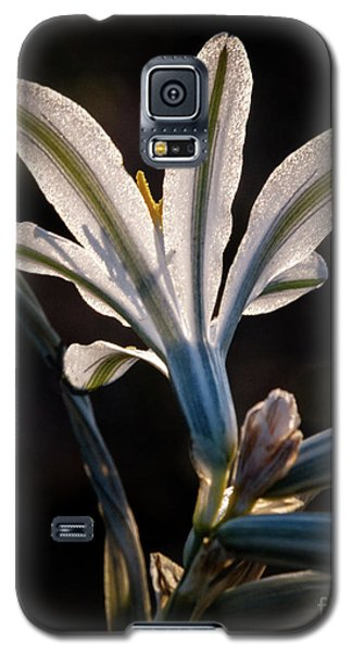 Galaxy S5 Case featuring the photograph Backlit Ajo Lily by Robert Bales