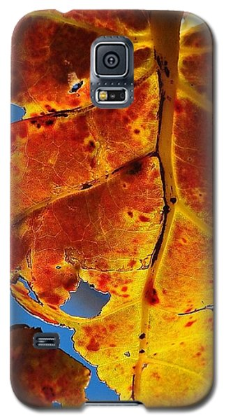 Backlit Beauty Galaxy S5 Case