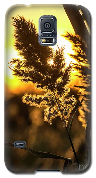 Galaxy S5 Case featuring the photograph Backlit By The Sunset by Zawhaus Photography