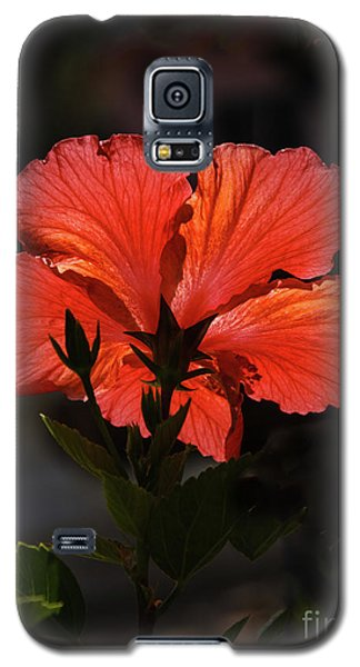 Galaxy S5 Case featuring the photograph Backlit Hibiscus by Robert Bales