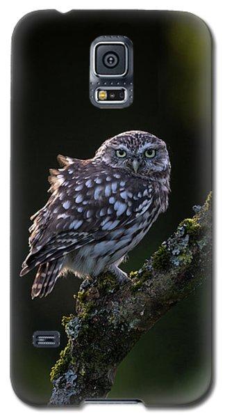 Backlit Little Owl Galaxy S5 Case