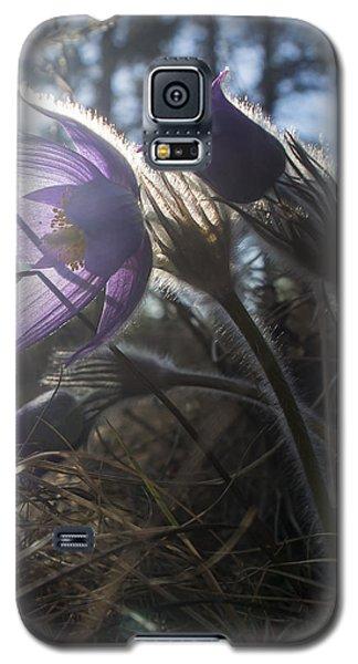 Backlit Pasque Flowers Galaxy S5 Case