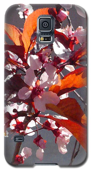 Backlit Pink Tree Blossoms Galaxy S5 Case