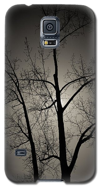 Backlit Trees Galaxy S5 Case
