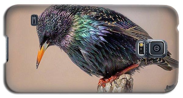 Backyard Birds European Starling Square Galaxy S5 Case by Bill Wakeley
