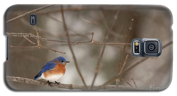 Backyard Blue Galaxy S5 Case