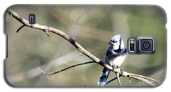 Backyard Blue Jay Galaxy S5 Case