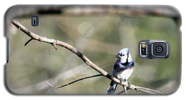 Backyard Blue Jay Oil Galaxy S5 Case