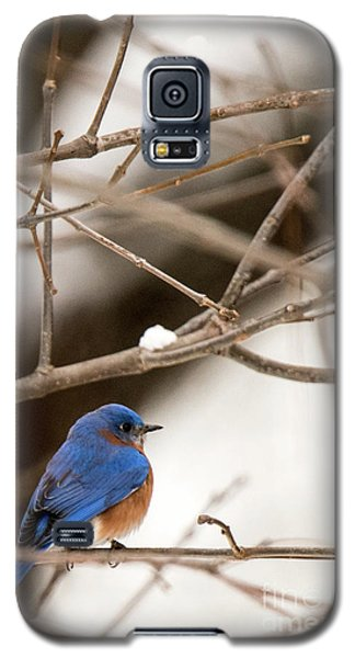 Backyard Bluebird Galaxy S5 Case