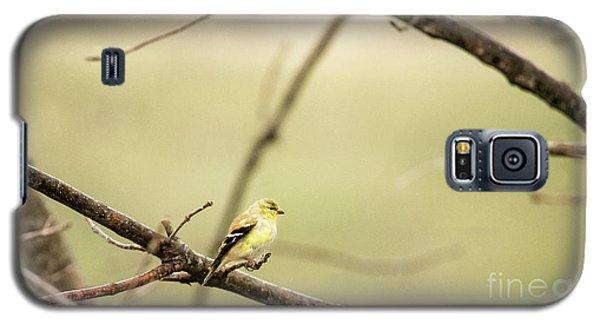 Backyard Yellow Galaxy S5 Case