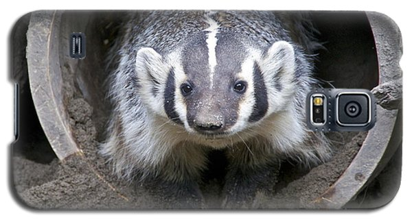 Badger Galaxy S5 Case by Sean Griffin