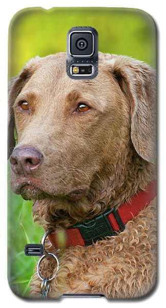 Galaxy S5 Case featuring the photograph Bailee 1149 by Guy Whiteley