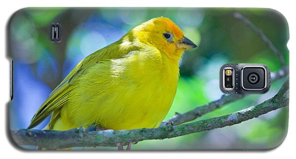 Balance Of Nature Edition 3 Galaxy S5 Case by Judy Kay