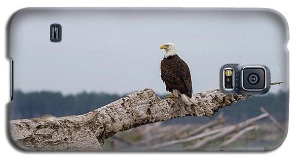 Bald Eagle #1 Galaxy S5 Case
