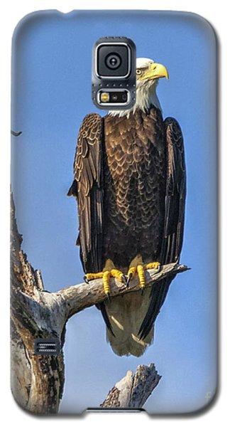 Bald Eagle 6366 Galaxy S5 Case