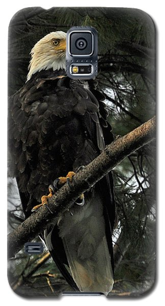 Galaxy S5 Case featuring the photograph Bald Eagle by Glenn Gordon