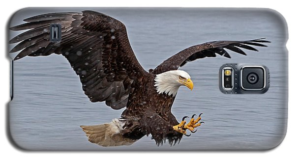 Bald Eagle Diving For Fish In Falling Snow Galaxy S5 Case