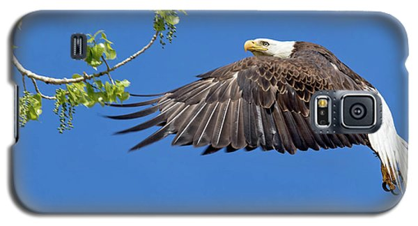 Bald Eagle In Flight 4-25-17 Galaxy S5 Case