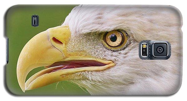 Bald Eagle In Profile Galaxy S5 Case