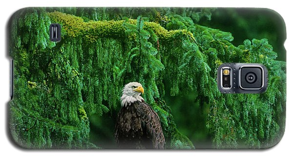 Bald Eagle In Temperate Rainforest Alaska Endangered Species Galaxy S5 Case